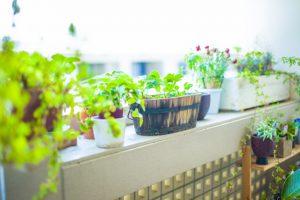 心地よい空間観葉植物